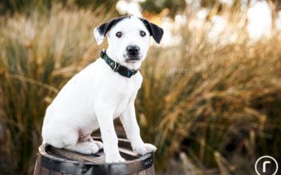 Adopt Me 04.17 – Sydney Rescue Dog Photos