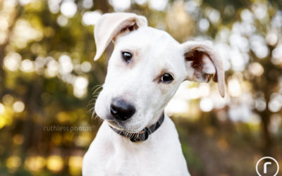 Adopt Me 05.17 – Sydney Rescue Dog Photos